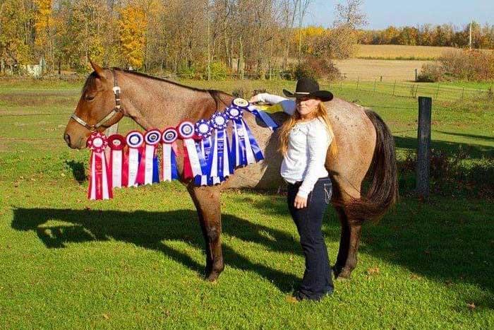 Our Horses - Bonbon